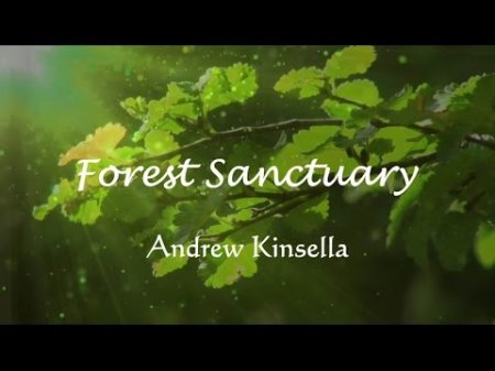 Andrew Kinsella - Forest Sanctuary